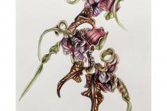 Alien-Orchid